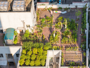 Planning a Green Roof? NYC Parks Department Can Help